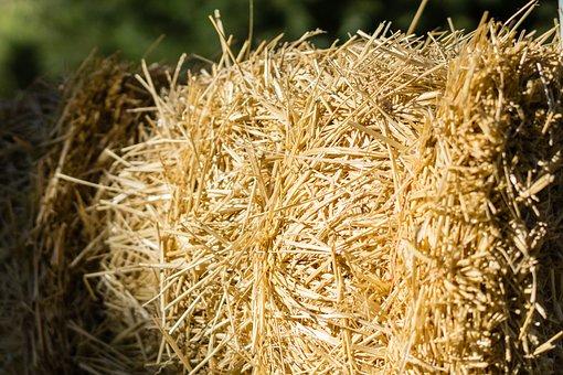Hay, Agriculture, Feed, Farmland, Straw, Grass, Farming
