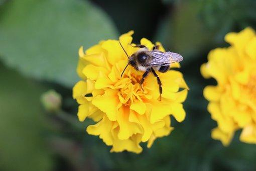 Bee, Flower, Summer, Macro, Bloom, Garden, Blossom