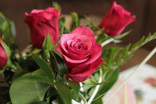 Roses, Flower, Flowers, Love, Red, Romantic, Rose