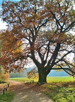 Autumn, Fall Color, Fog, Tree, Away, Meadow, Berlin