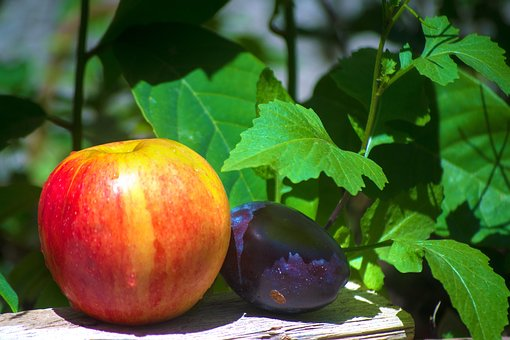 Apple, Fruit, Vitamins, Healthy, Nature, Autumn, Fresh
