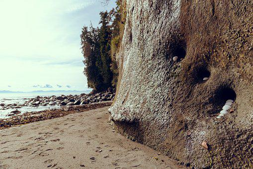 Beach, Holes, Prints, Rocks, Sand, Shells, Sky, Trees