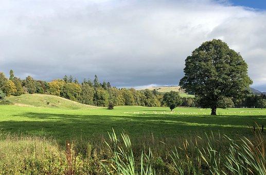 Landscape, Tree, Nature, Clouds, Rest, Green, Light