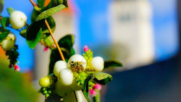 Bee, Macro, Insect, Nature, Pollen, Bloom, Flower
