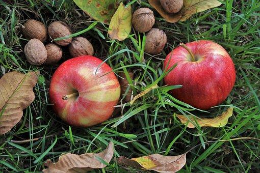 Fruit, Nuts, Autumn, Mature, Foliage, Apples, Apple