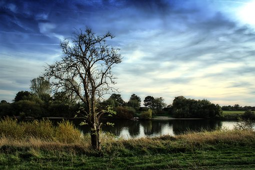 Tree, Bank, River, Weser, Lower Saxony, Middle Weser