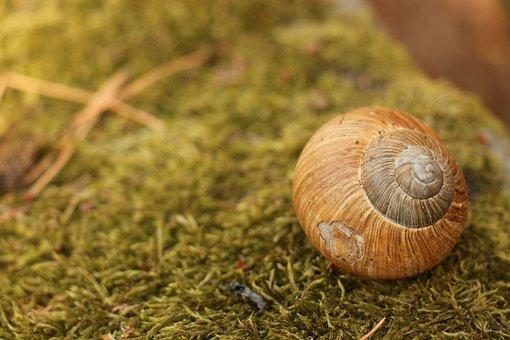 Snail, Moss, Nature, Shell, Autumn, Green