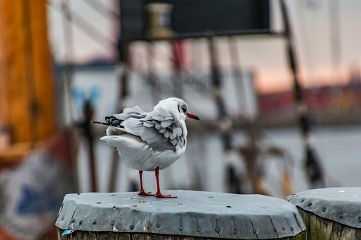 Seagull, Hamburg, Animal, Port, Bird, Nature, Elbe