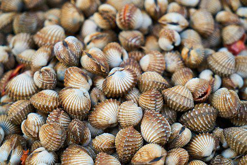Mussels, Shelled, Shell, Nature, Snails, Psoriasis