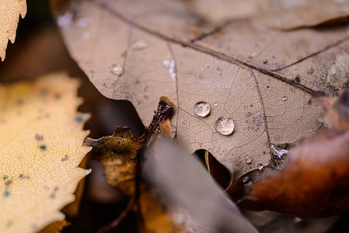 Oak, Leaf, Drop, Macro, Autumn, Leaves, Nature, Tree