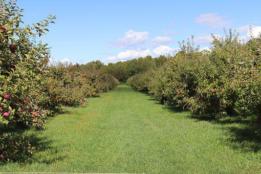 Sky, Clouds, Trees, Landscape, Apples, Orchard