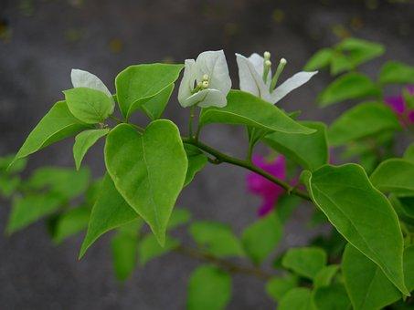Paper Flower, Flower, Ornamental Trees, Page, Blank