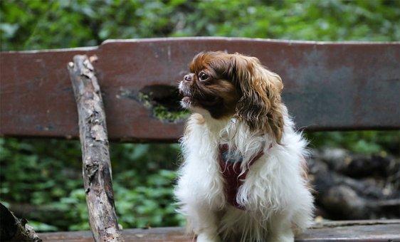 Bench, Dog, Pet, Canine, Sitting, Animal, Portrait