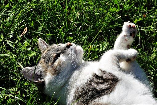 Cat, Playful, Pet, Cute, Domestic Cat