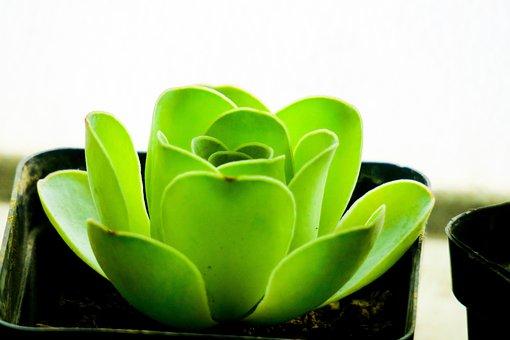 Hong Kong, Plant, Petal, Color, Green, Bud