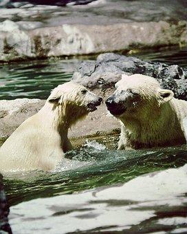 Polar Bears, Mother, Cub, Playing, Sunshine, Happy