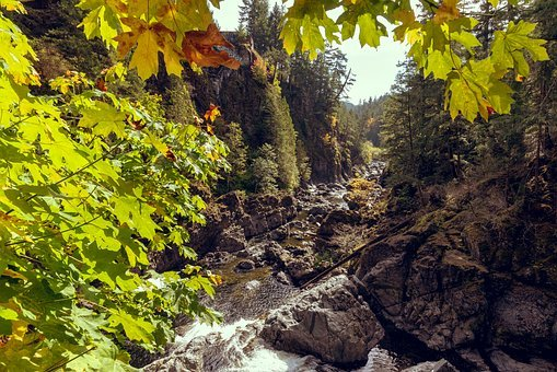 Creek, Fall, River, Rocks, Trees, Water, Leaves, Maple
