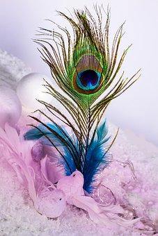 Feather, Ease, Slightly, Flexible, Eye, Color