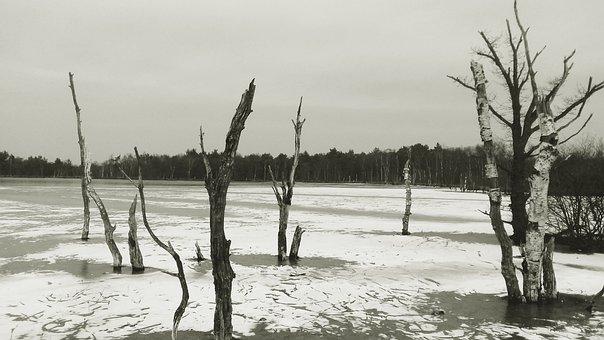 High Moor, Winter, Snow, Ice, Birch, Dead Trees