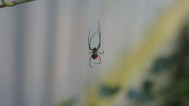 Spider, Web, In, Insect, Nature, Creepy, Bug
