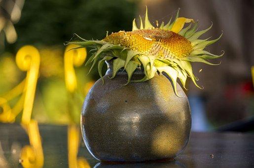 Composition, Sunflower, Autumn, Yellow, Flower, Summer
