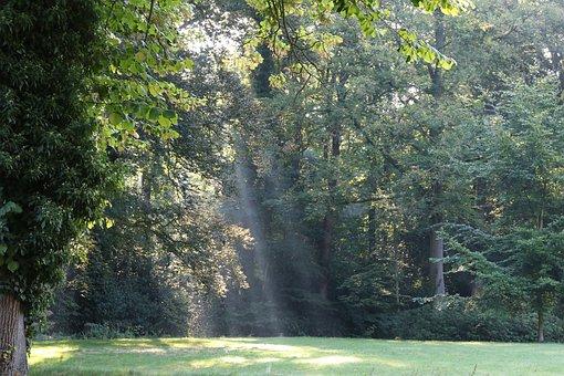 Glade, Forest, Sunbeam, Sun
