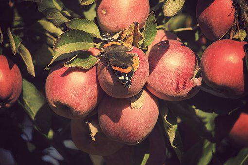 Autumn, The Sun, Sad, Apples, Collections, Red, Green