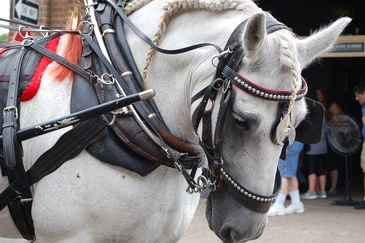 Horse, Carriage, Coach, Transport, Tourism, Vintage