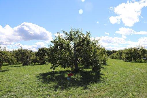 Sky, Apple, Tree, Blue, Clouds, Autumn