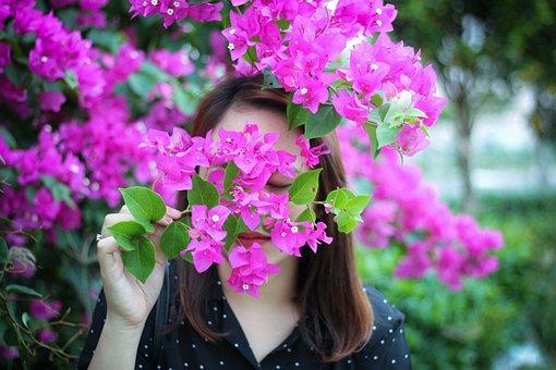 Bougainvillea, Triple Flower, Blossom, Flower, Pink