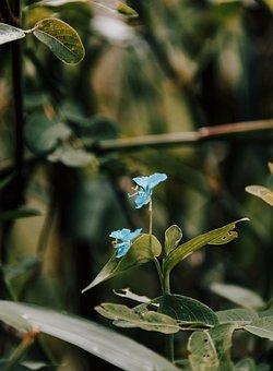 Flower, Natural, Forest, Landscape, Trees, Water