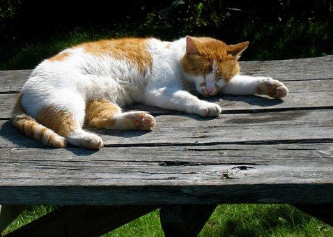 Cat, Nap, Orange, White, Fur, Sleep, Sun, Afternoon