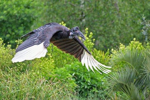 Hornbill, Bird, Fly, Wing, Tropical, Green, Animal