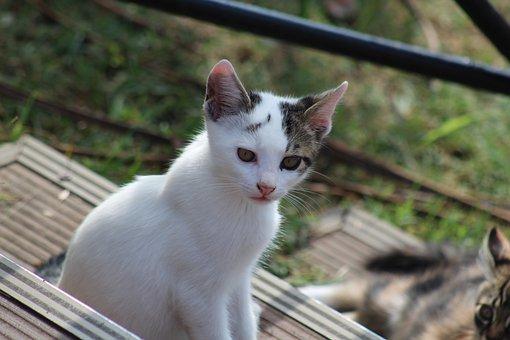 Cat, Cute, Animal, Pets, Little, Young, Animals, Yalova