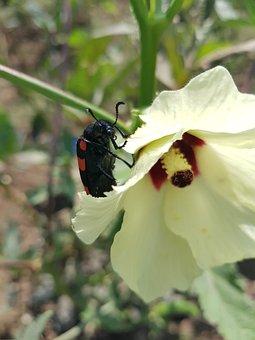 Reptile On Flower, Flower, Yellow Flower