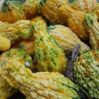 Ornamental Gourds, Gourd, Yellow, Fall, Decoration