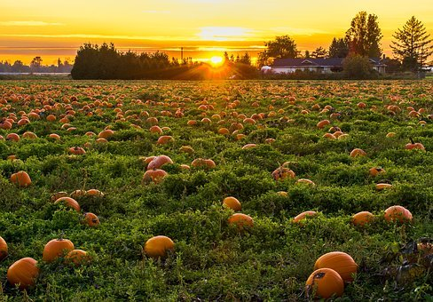 Agriculture, Autumn, British Columbia, Canada