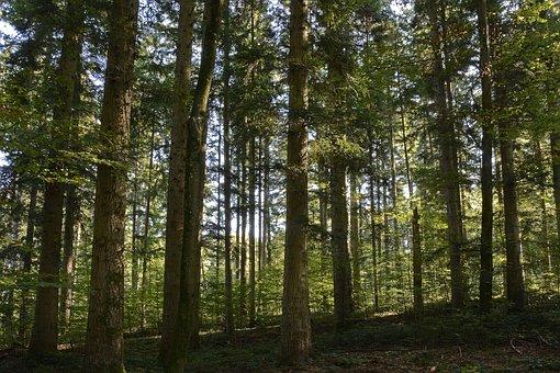 Trees, Forest, Nature, Landscape, Light, Atmosphere