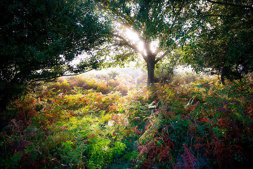 Forest, Autumn, Nature, Magic, Tree, Sunbeam, Morning