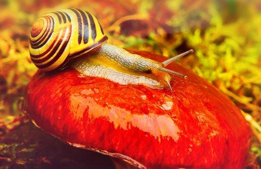 Wstężyk Huntsman, Molluscs, Mushroom, Maslak, Autumn
