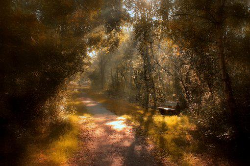 Autumn, Sunbeam, Forest, Nature, Landscape, Trees