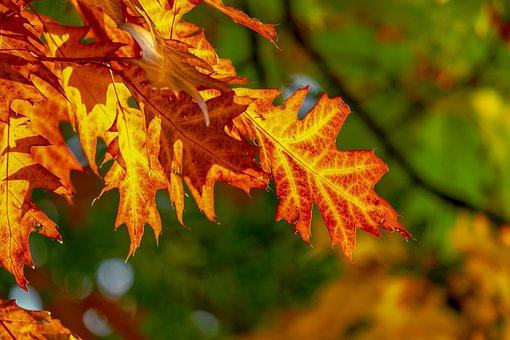 Fall Foliage, Leaves, Bright, Color, Fall Color