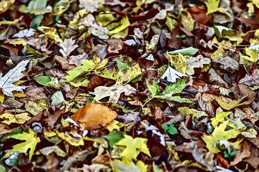 Foliage, Autumn, Colorful, Yellow, Wilted, Red, Brown