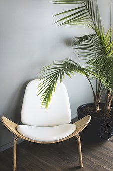 Chair, Plant, Furniture, Interior