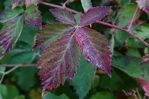 Plant Leaf, Dew, Autumn, Dewdrop, Close Up, Morgentau