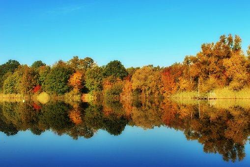 Autumn, Trees, Colorful, Nature, Forest, Landscape
