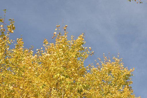 Autumn, Leaves, Yellow, Sky, Blue, Contrast