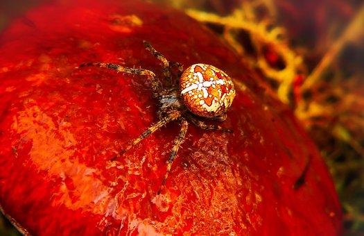 Crusader Garden, Arachnids, Insect, Mushroom, Maslak
