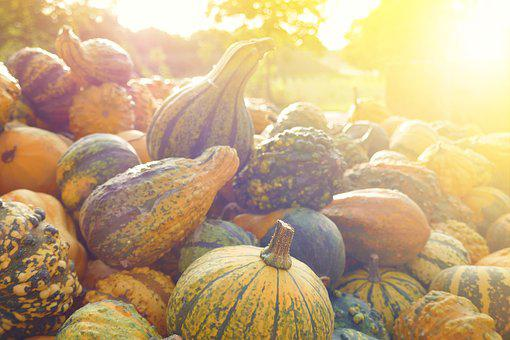 Pumpkin, Autumn, Group, Set, Sun, Light, Decorative