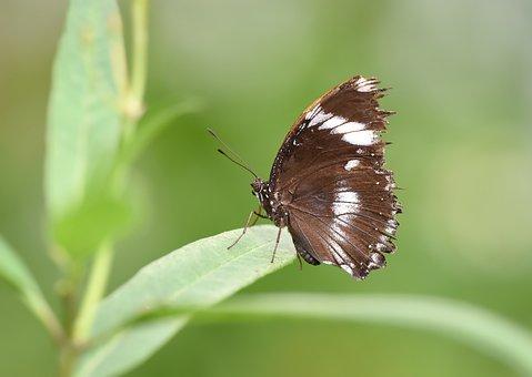 Kelebek, Butterfly, Doğa, Nature, Macro, Böcek